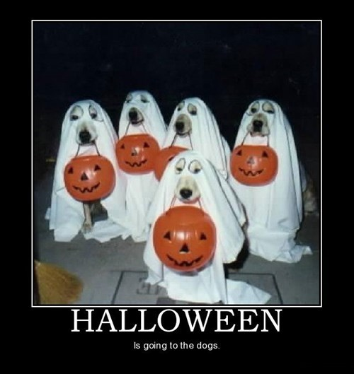 costume,dogs,trick or treat,ghosts,funny