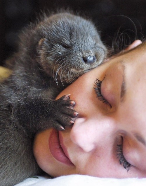 face,nap,snuggle,otters