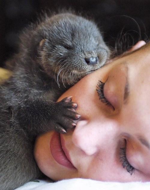 face nap snuggle otters - 7859721472