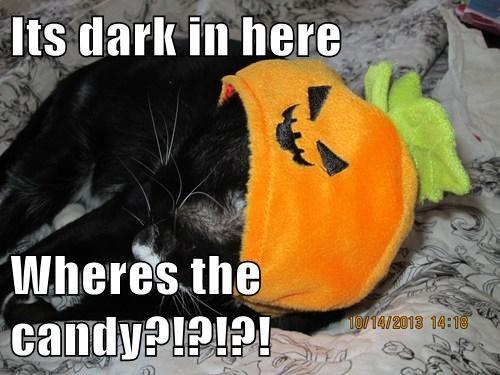 candy halloween cute Cats - 7859747072