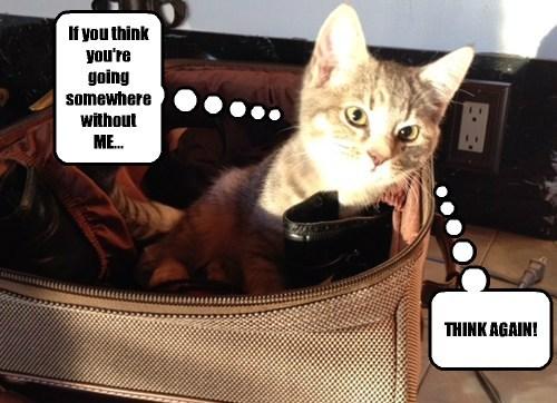 Travel Cats - 7859748864