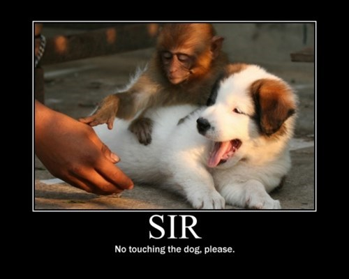 dogs hands off monkey funny animals - 7859759104