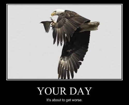 eagles birds bad day funny animals - 7859761920
