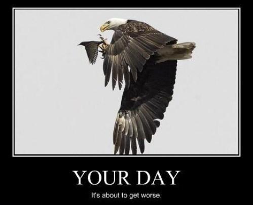 eagles birds bad day funny animals - 7859761920