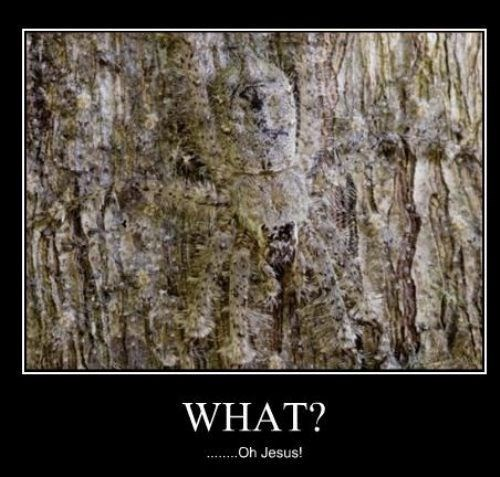 scary wtf spider camouflage - 7859793664