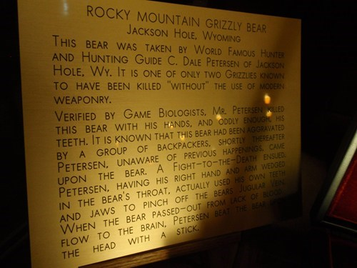 man bears Wyoming animals - 7859857152