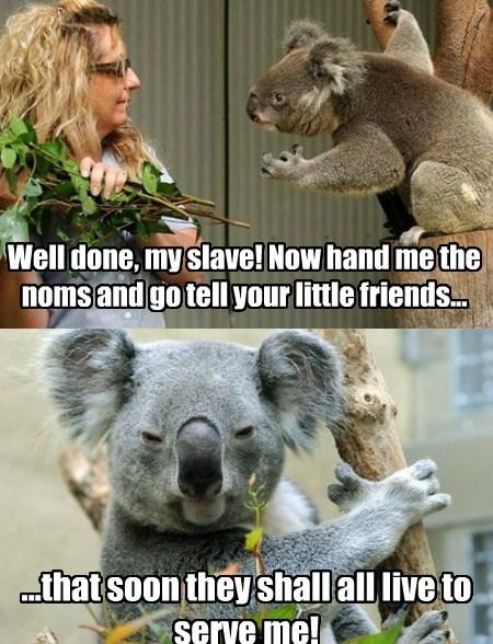 koalas diabolical funny - 7859971584