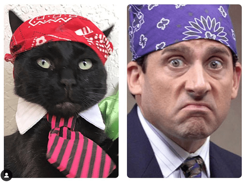 the office Michael Scott Cats - 7859973