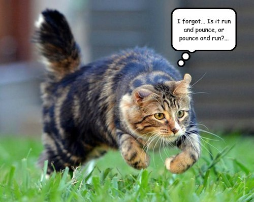 I forgot... Is it run and pounce, or pounce and run?...