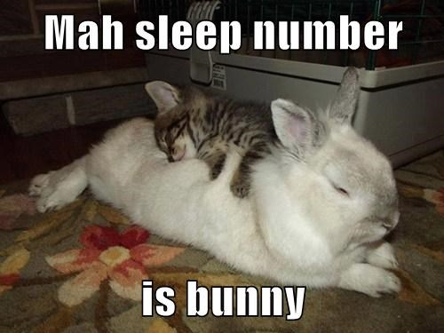 kitten sleep number cute bunny rabbits - 7860998656