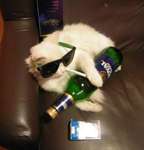 beer cat sunglasses funny after 12
