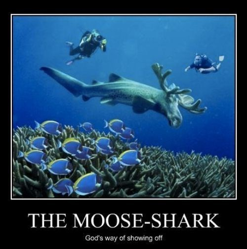 wtf incredible shark animal moose funny - 7861168128