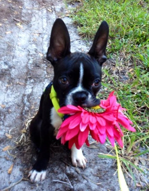 dogs cute Flower - 7861246720
