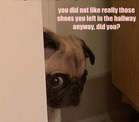you did not like really those shoes you left in the hallway anyway, did you?
