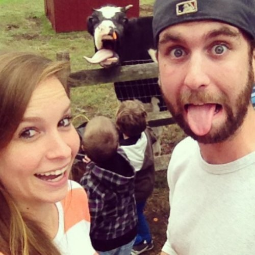 photobomb tongue out cows