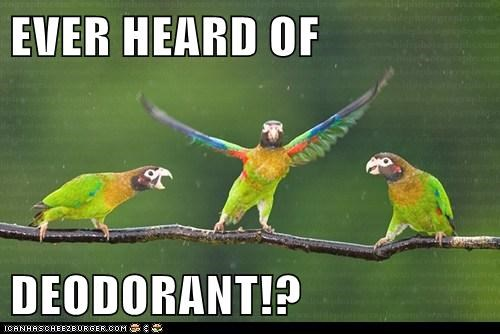 air freshener,deodorant,parrots