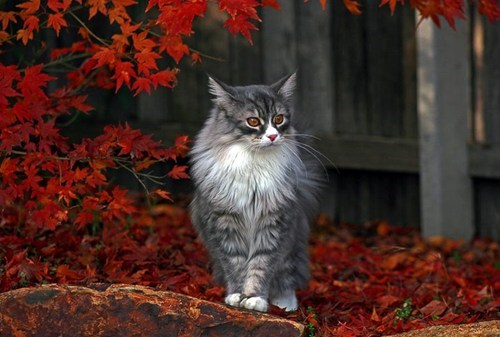 autumn,Cats,beautiful