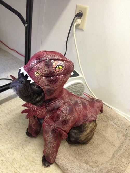 costume dogs pug velociraptors halloween - 7862879232