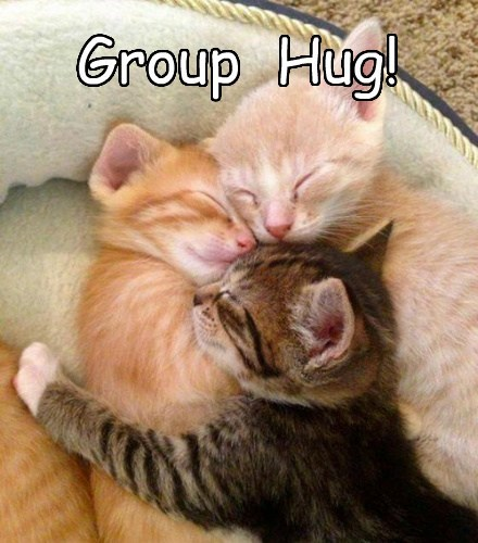 kitten snuggle cute group hug - 7863246336