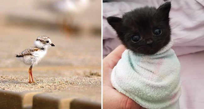 kitten wrapped in a blanket and a baby bird