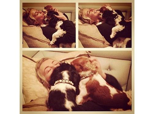 julianne hough puppies kisses instagram people pets cute - 7863522560