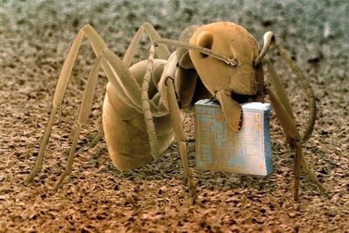 microchip technology science funny ant