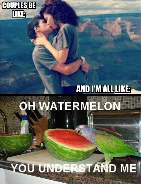 birds,watermelon,funny,dating