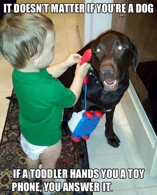 dogs,toddler,phone,pretend,Cats