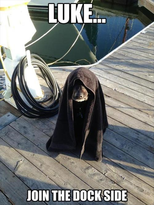 dogs,dock,star wars,the force,sailing