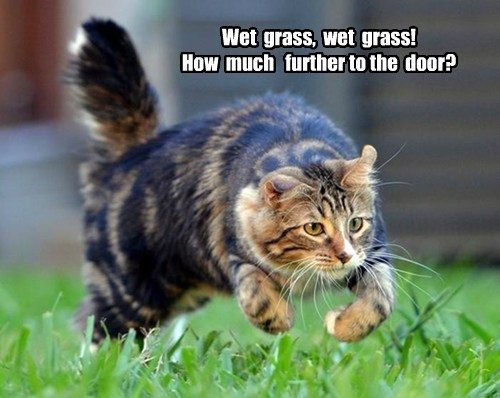 Wet grass, wet grass! How much further to the door?