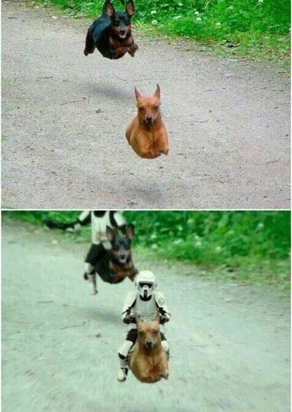 speeder,dogs,star wars,stormtrooper