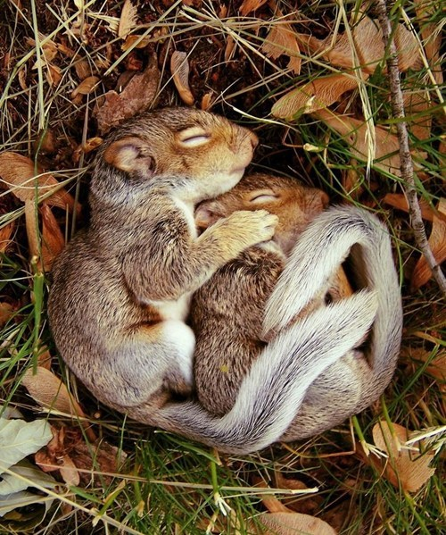 autumn squirrels sleeping - 7864082688