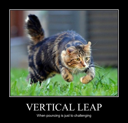VERTICAL LEAP When pouncing is just to challenging