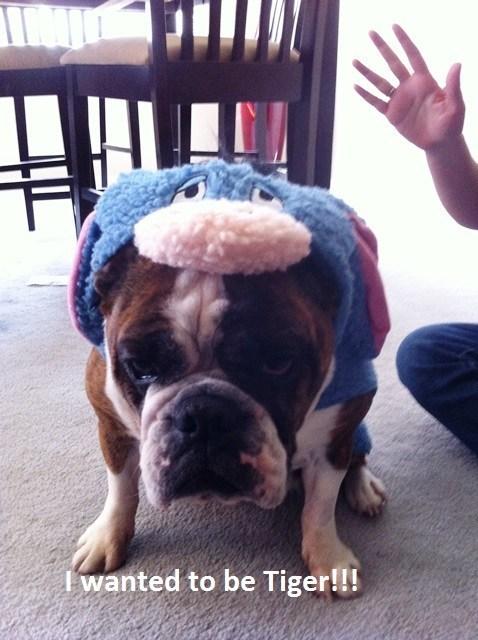 costume dogs halloween eeyore - 7864397568