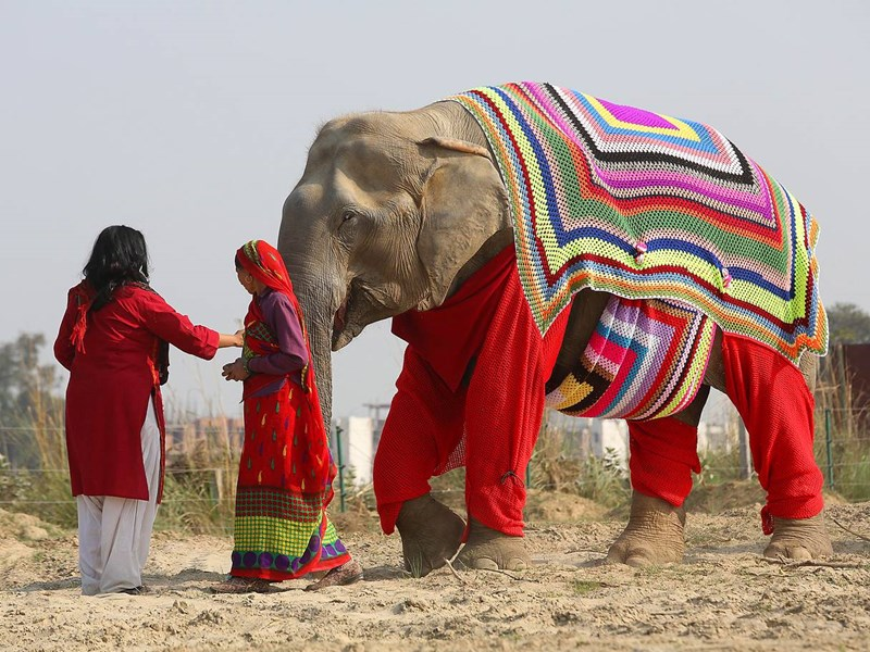 elephant knits elephants india Sanctuary colorful Knitted beautiful jumper protection - 7864581