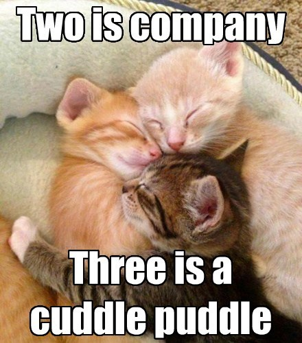 Two is company Three is a cuddle puddle