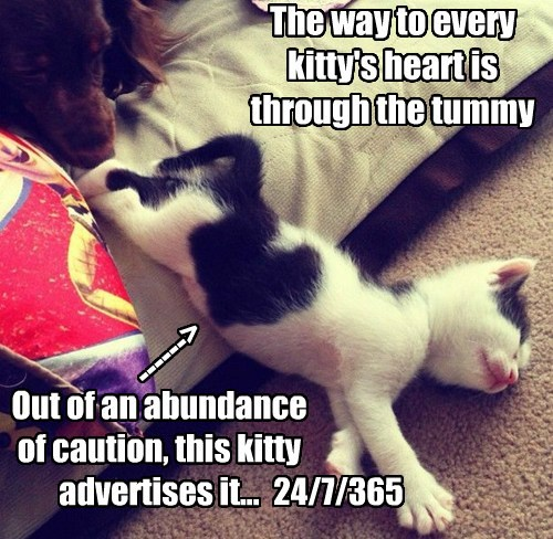 The way to every kitty's heart is through the tummy Out of an abundance of caution, this kitty advertises it... ------> 24/7/365