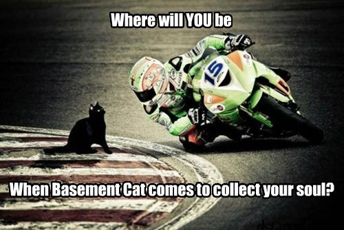 Where will YOU be When Basement Cat comes to collect your soul?