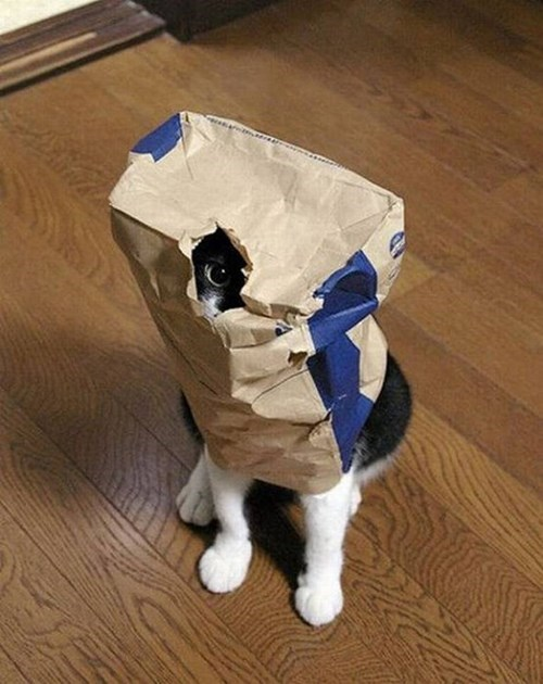 bag,hide,Cats