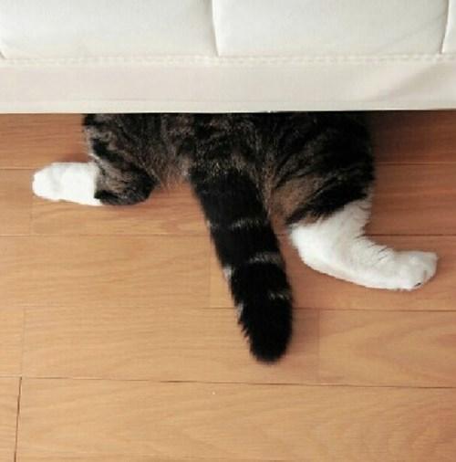 Cats,hide,behind