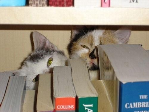 Cats,hide,books,shelf