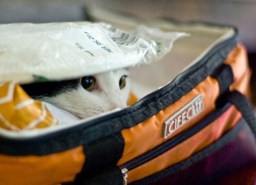 Cats,hide,cooler,picnic