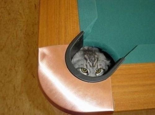 Cats,hide,pool,billiards,corner pocket
