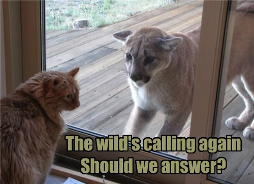 The wild's calling again Should we answer?