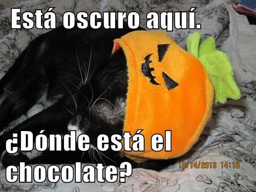 Está oscuro aquí.   ¿Dónde está el chocolate?
