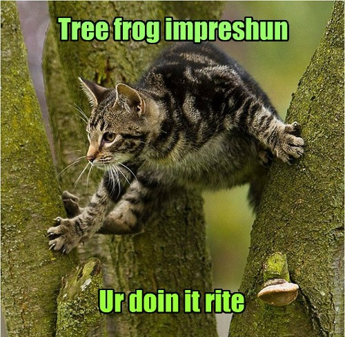 camo lolspeak tree frogs Cats - 7865209856