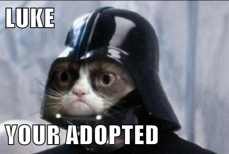 Grumpy Cat star wars adopted - 7865227520