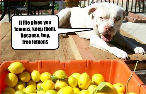 dogs,lemons,wise