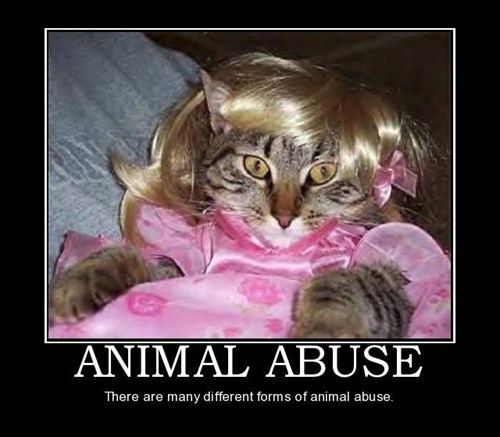 cat abuse funny animals - 7865350400