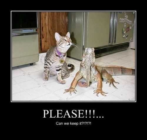 lizards wtf Cats funny animals - 7865357312